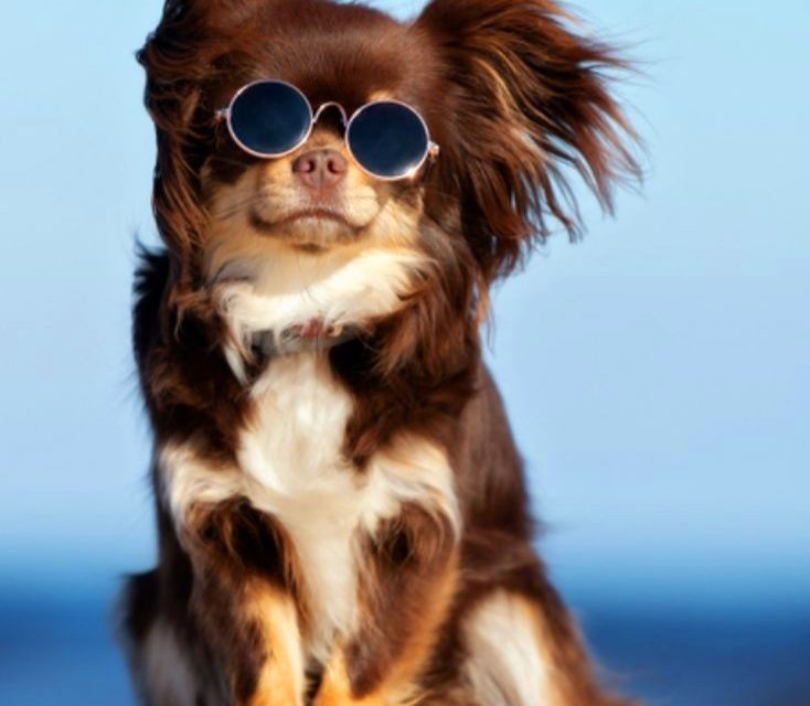 Pet Essentials: Prove your pets that you love them enough