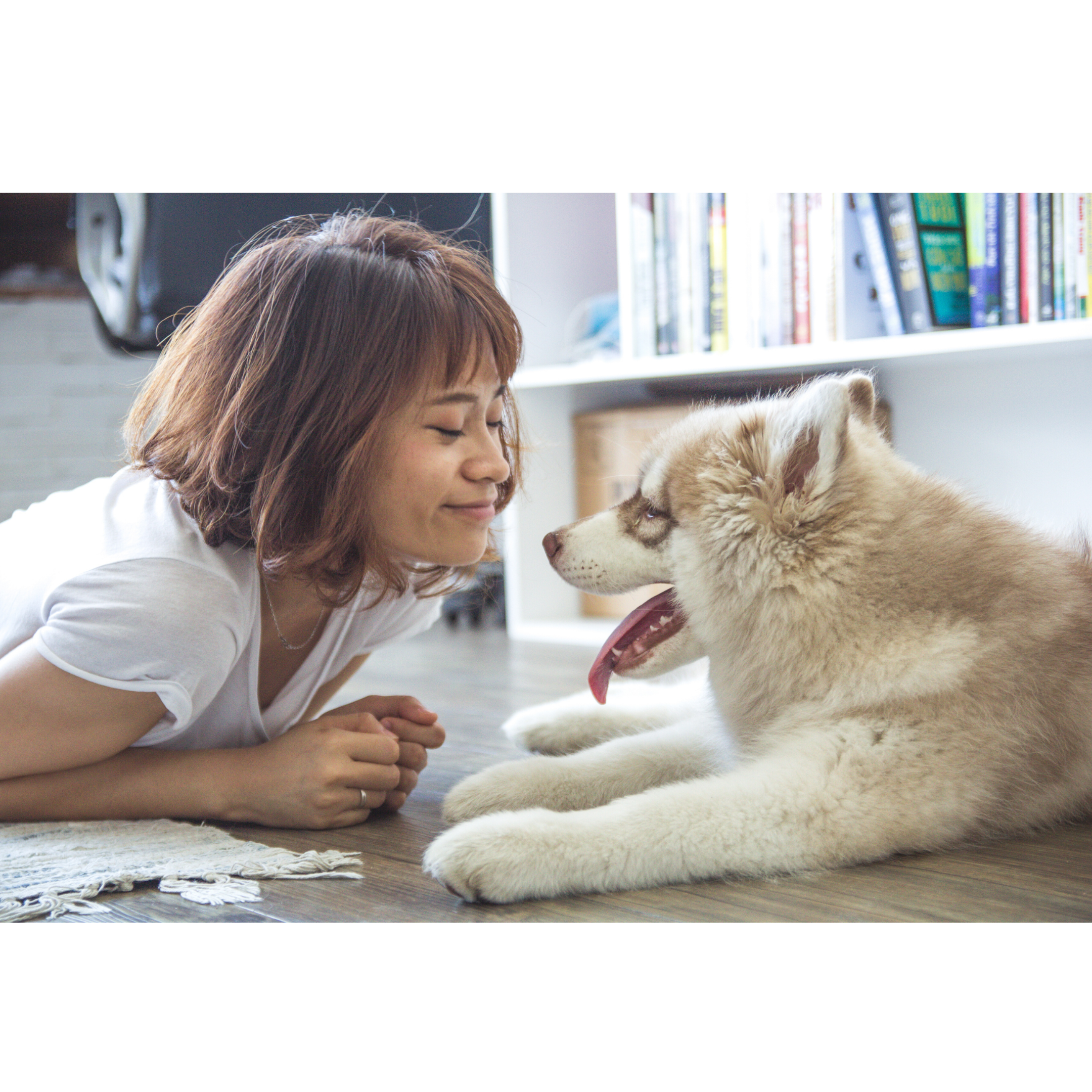 Paws everything you're doing and get your furry friends the quarantine supplies