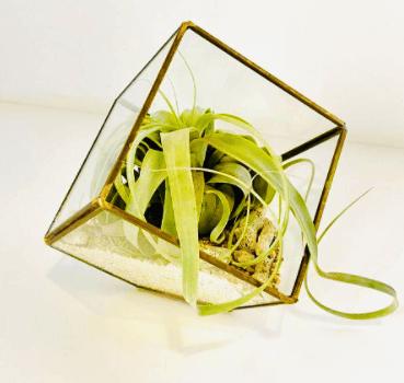 Aquarius gift ideas VoucherCodesUAE