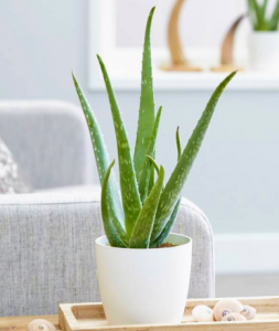 low maintenance houseplants from VoucherCodes