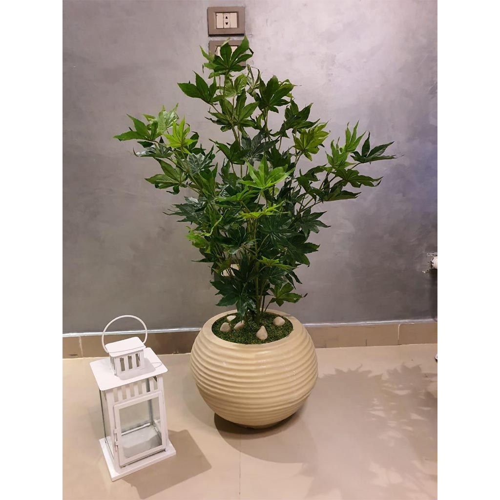 Cancer Zodiac Gift Ideas - Potted Plant or Planter