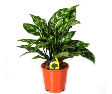 Low Maintenance Houseplants VoucherCodesUAE
