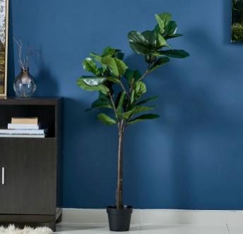 Ficus plant in concrete pot - living room design decoration