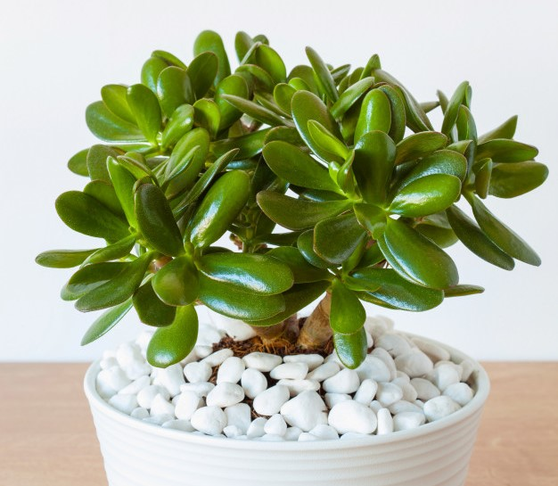 the best homebase indoor plants