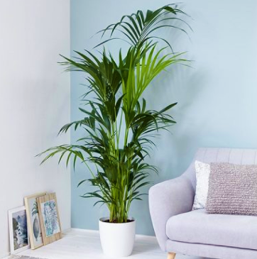homebase indoor plants with low Maintenance from VoucherCodesUAE