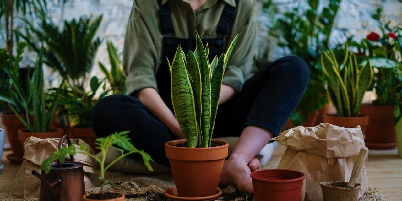 10 low maintenance houseplants to add life to your indoors