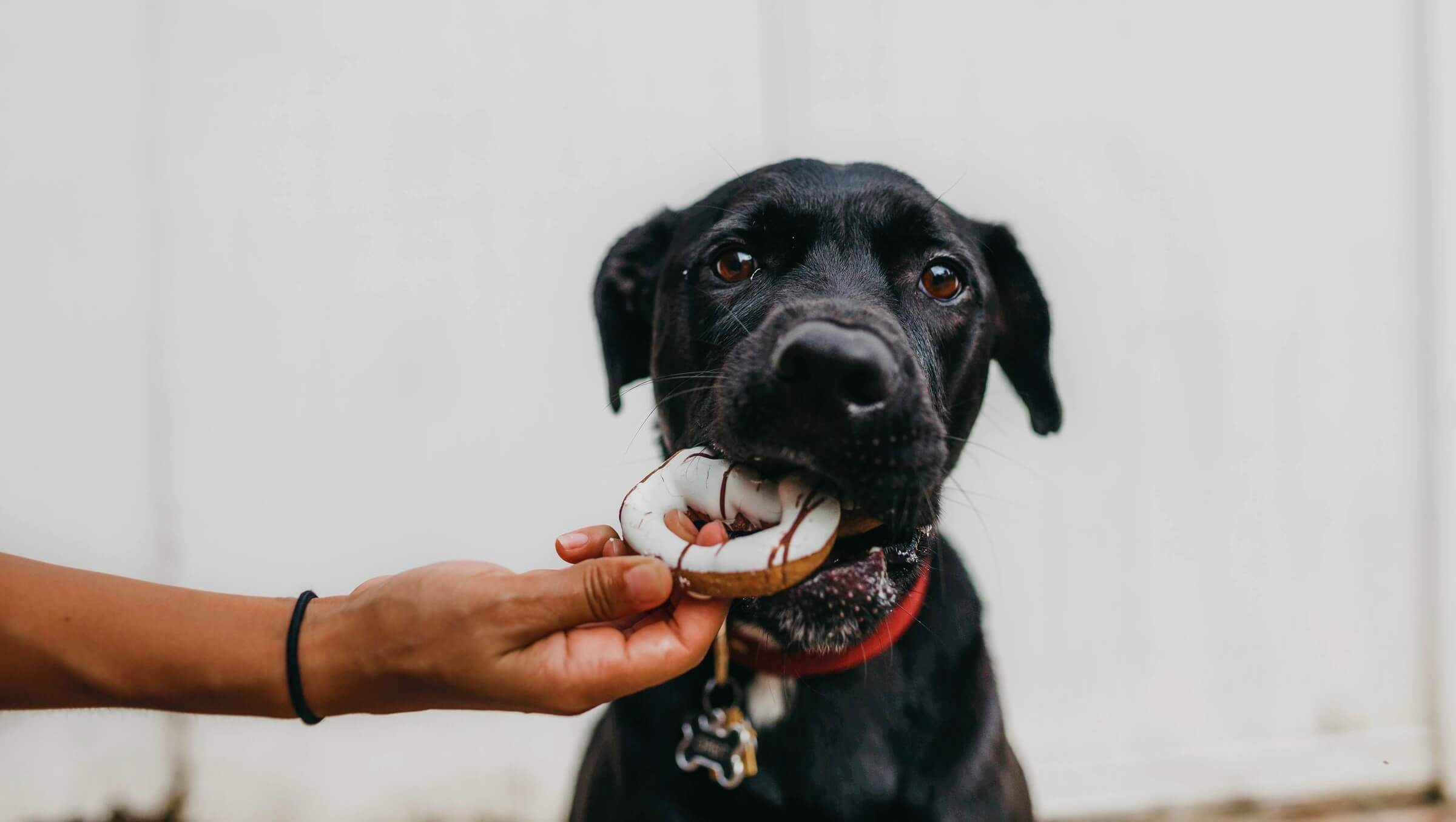 Give your pet the right food and watch them conquer your heart
