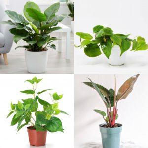 homebase indoor plants decorations