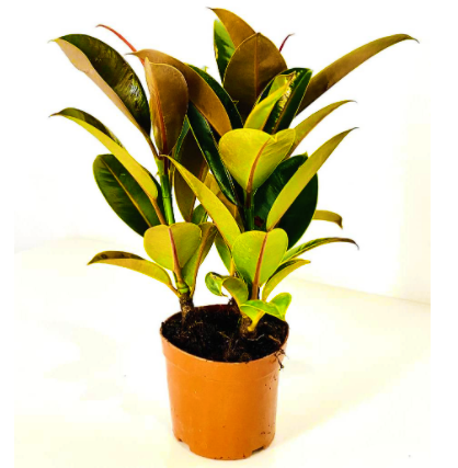 the best Low Maintenance Houseplants VoucherCodesUAE