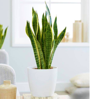 homebase indoor plants VoucherCodesUAE