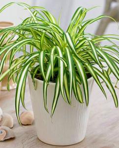 beautiful homebase indoor plants VoucherCodesUAE