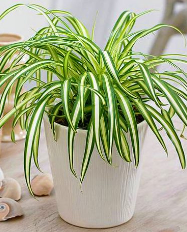 beautiful homebase indoor plants VoucherCodesUAE