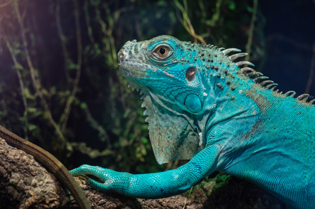 The Green Planet animals and crucial information