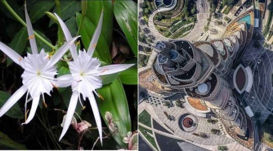 burj khalifa flower