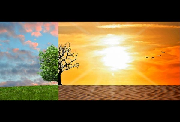 How to tackle climate change as a conscious UAE resident