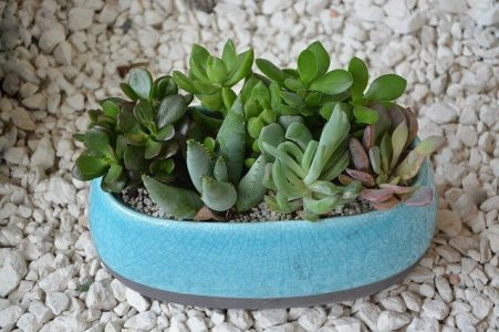 Mother's day gift ideas - plants